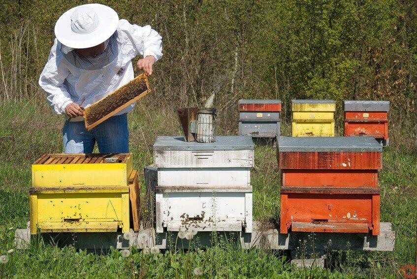 apiario criação de abelhas