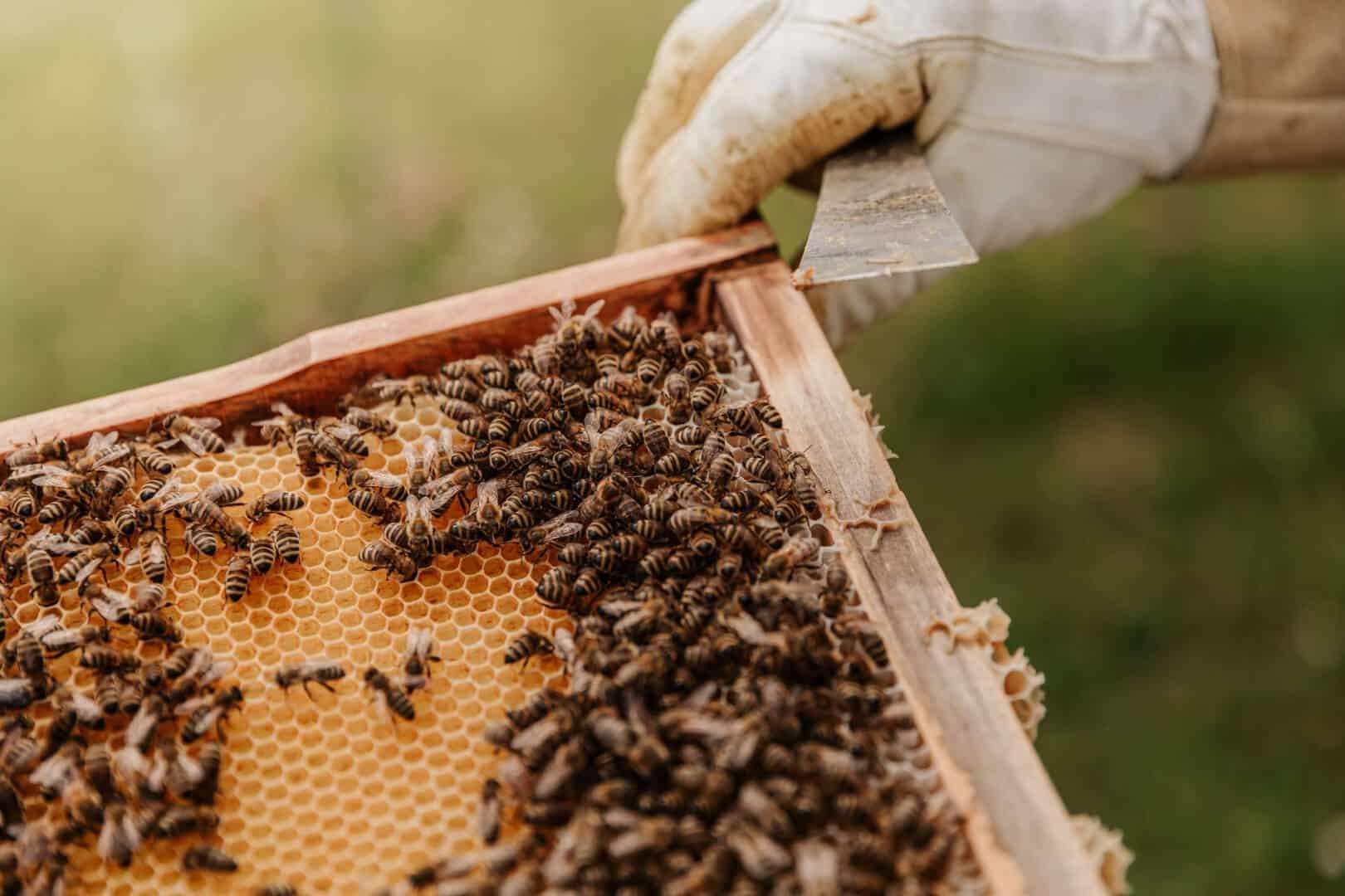 Criação de abelhas: Dicas de como montar o seu apiário