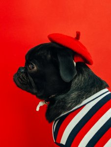 Melhores negócios para 2020 - Pets